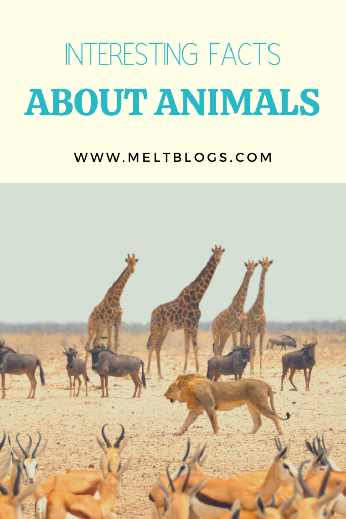 facts about animals
